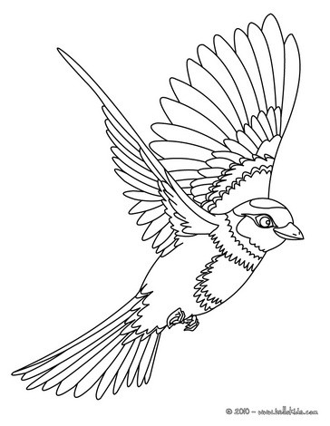 Drawn sparrow detailed Coloring pages Hellokids Flying Flying