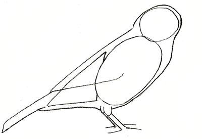 Drawn sparrow detailed Step step a Sparrow Step
