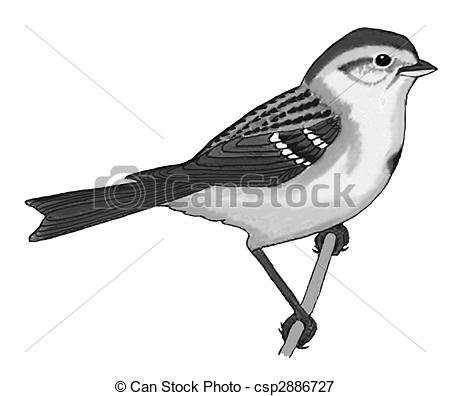 Mockingbird clipart sparrow Stock arborea Tree Tree Sparrow