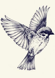 Drawn sparrow color Very Las de son detailed