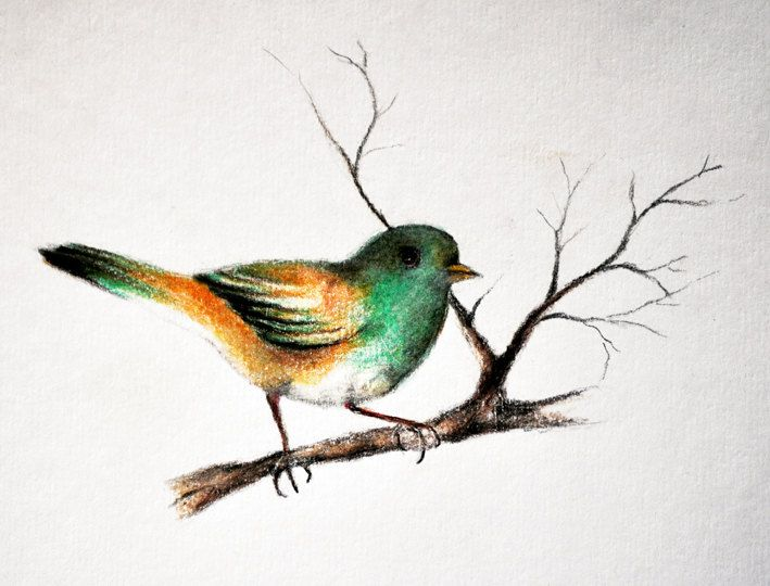 Drawn sparrow color Color Google 138 Sketches pencil