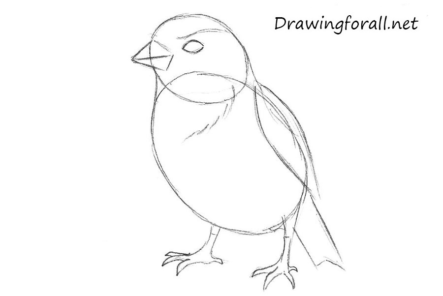 Drawn sparrow detailed How DrawingForAll by sparrow net