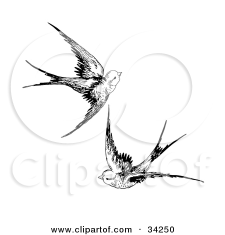 Drawn sparrow flight drawing  Flying flying together Dermatology