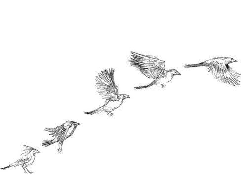 Drawn sparrow flight drawing Draw/quotes  Heart more images