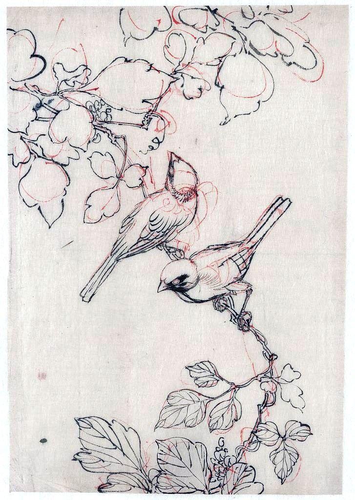 Drawn brds ink Ideas branch Best vintageprintable Birds