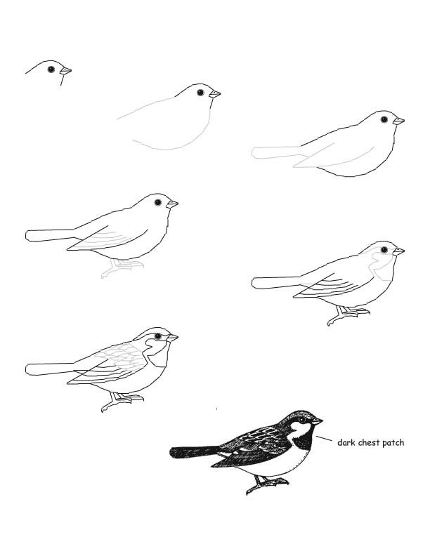Drawn sparrow love Sparrow Pinterest tips drawing draw