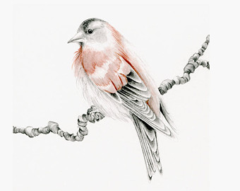Drawn sparrow detailed By Sparrow Pencil Sketch Art