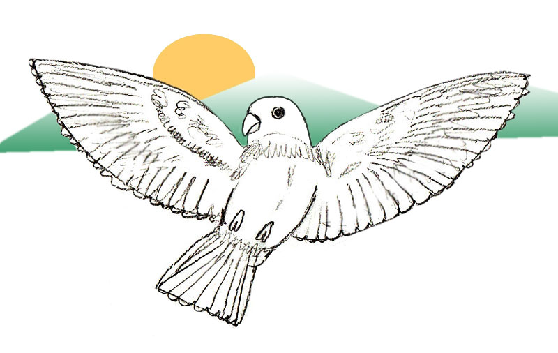 Drawn parrot bird fly Draw Draw drawing Step by