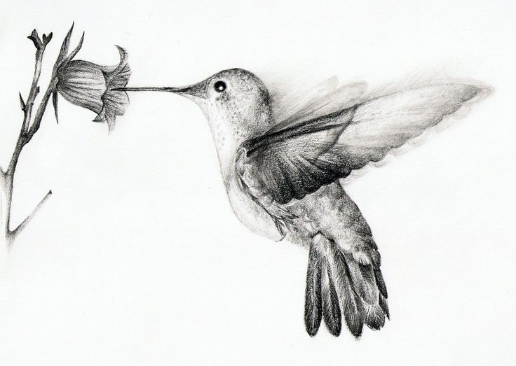 Drawn hummingbird black and white Drawings Awesome Bird Hummingbirds Bing