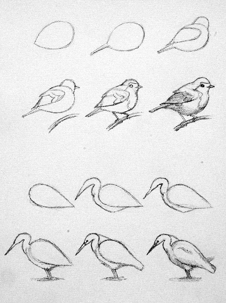 Drawn sparrow simple And ★ Discover the bird!