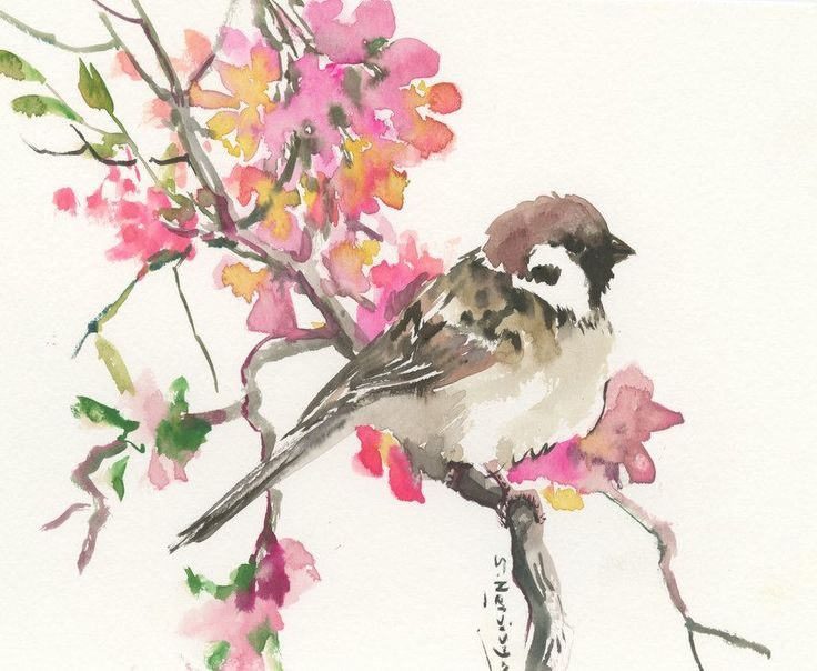 Drawn sparrow tree spirit On watercolor Spring in sparrow