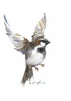 Drawn sparrow tree spirit Birds watercolor for flying alexanders