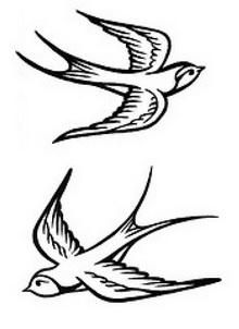 Drawn sparrow detailed Drawings Drawings Bird Drawings