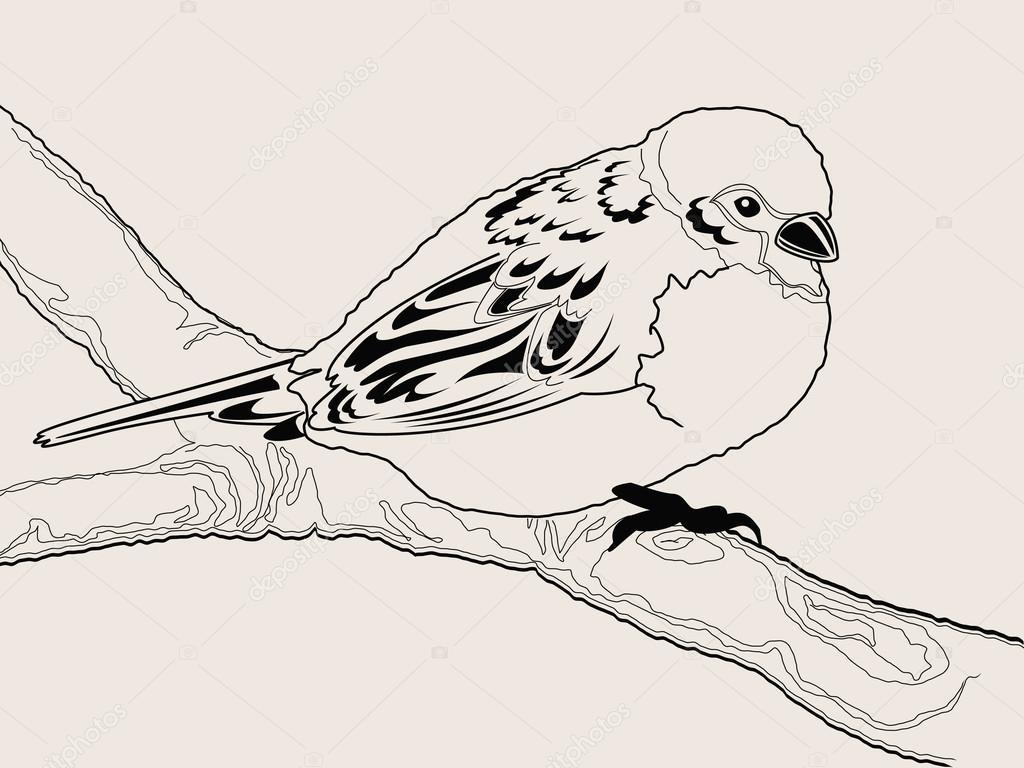 Drawn sparrow vector #2702760 © — #2702760 bird