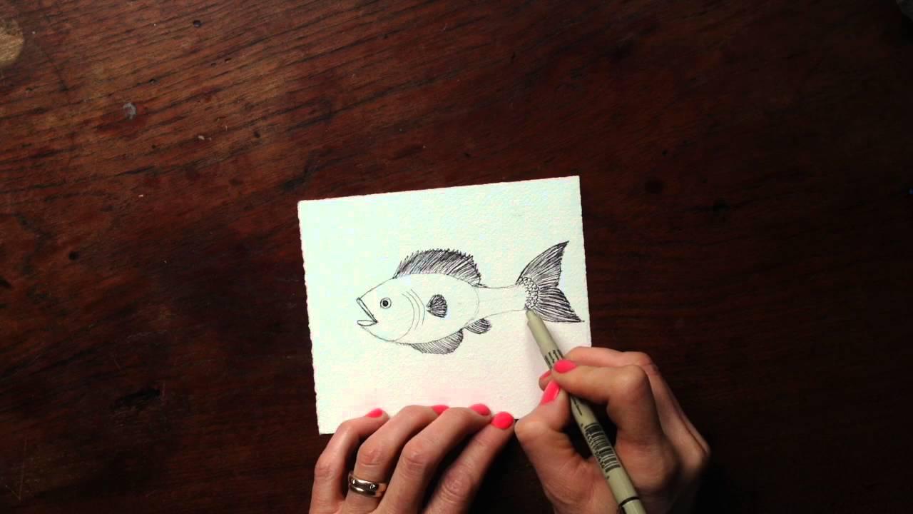 Drawn spheric ink Draw Intermediate Drawing Draw Fish: