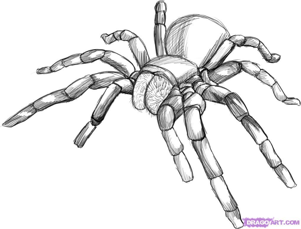 Drawn spider 3d art #13