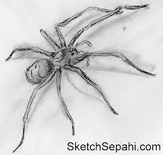 Drawn spider 3d art #8