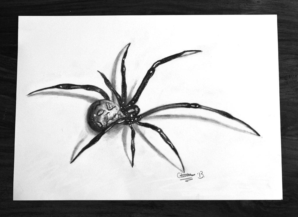 Drawn spider 3d art #4