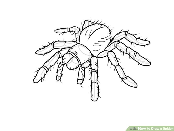 Drawn spider 8 Image to Draw wikiHow