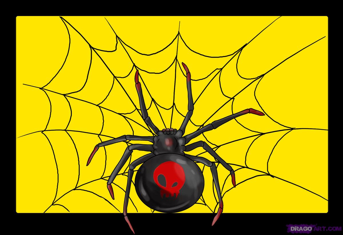 Drawn spider anime To How Black to spider