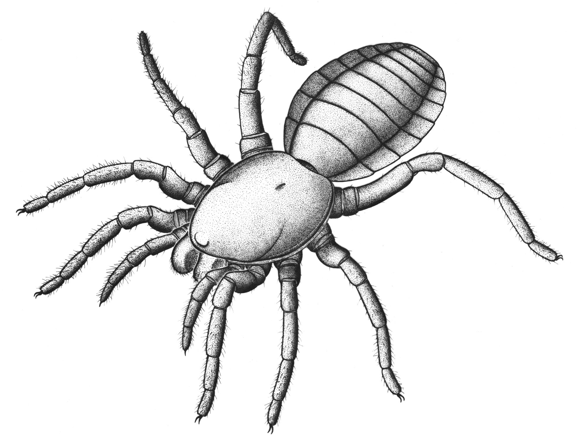 Drawn spider arachnid #6