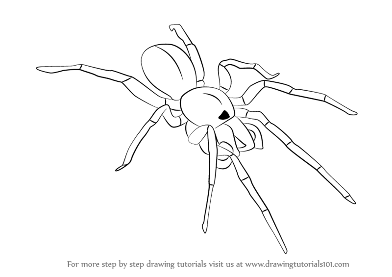 Drawn spider arachnid #4
