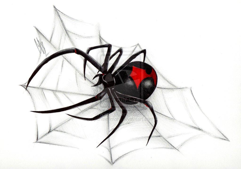 Drawn spider basic Black Spider Black Spider Black