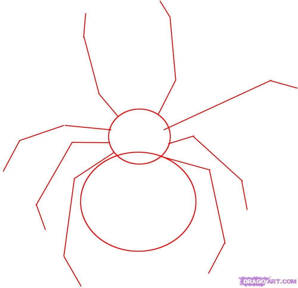 Drawn spider basic Step spider How Animals black