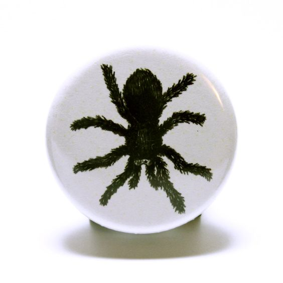 Drawn spider bug  Button and Insect 1