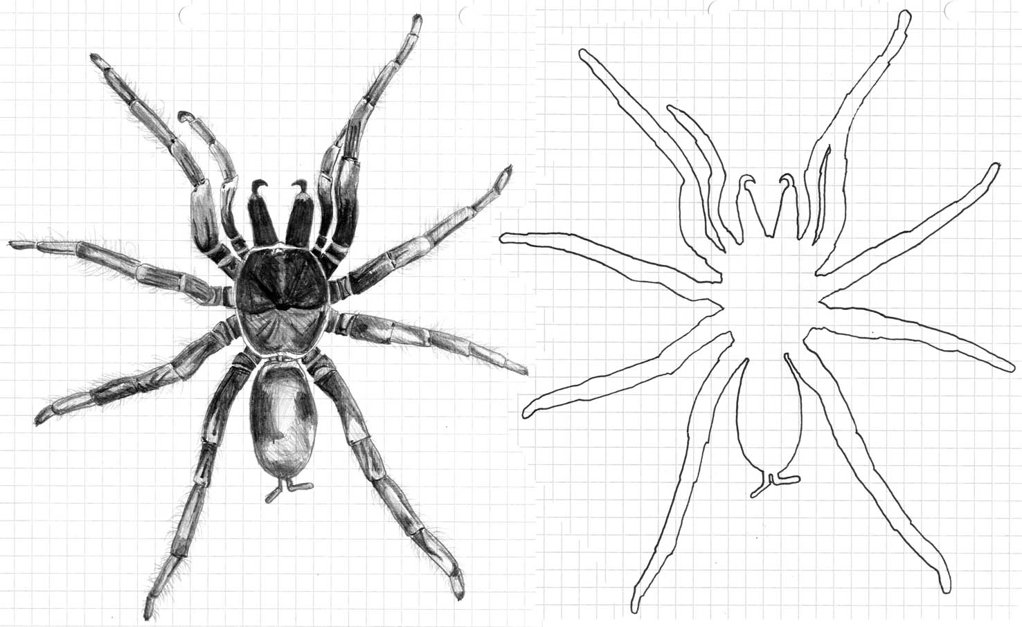 Drawn spider bug And art Our visitors spiders