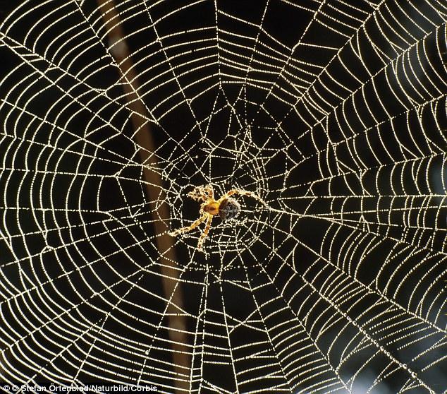 Drawn spider bug  flying 'electrically A in