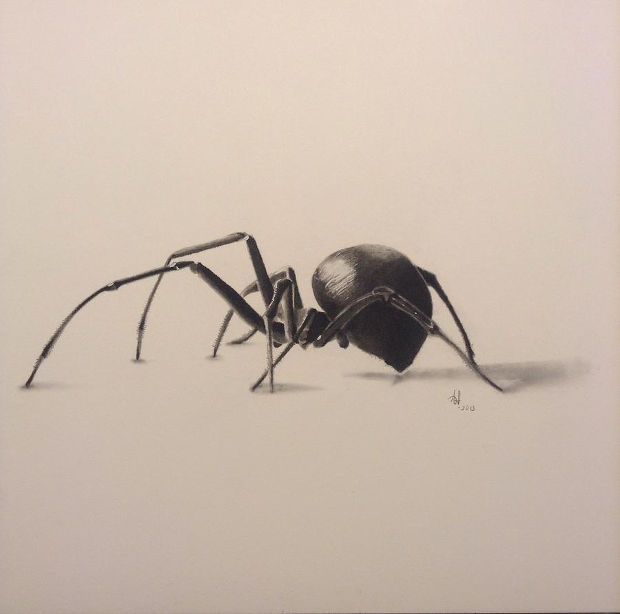 Drawn spider charcoal #3
