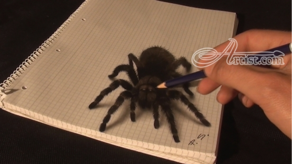 Drawn spider charcoal #6