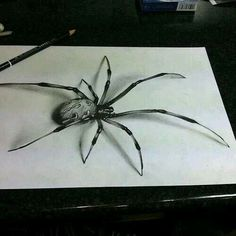 Drawn spider charcoal #11