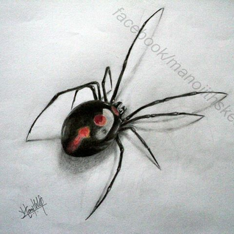 Drawn spider charcoal #12