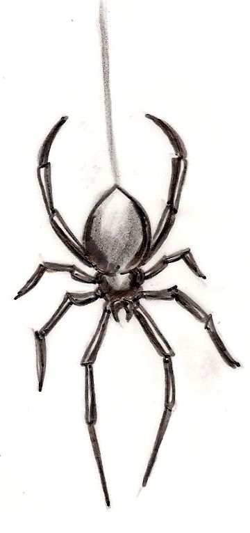 Drawn spider detailed 20+ Black ideas ~Metacharis on