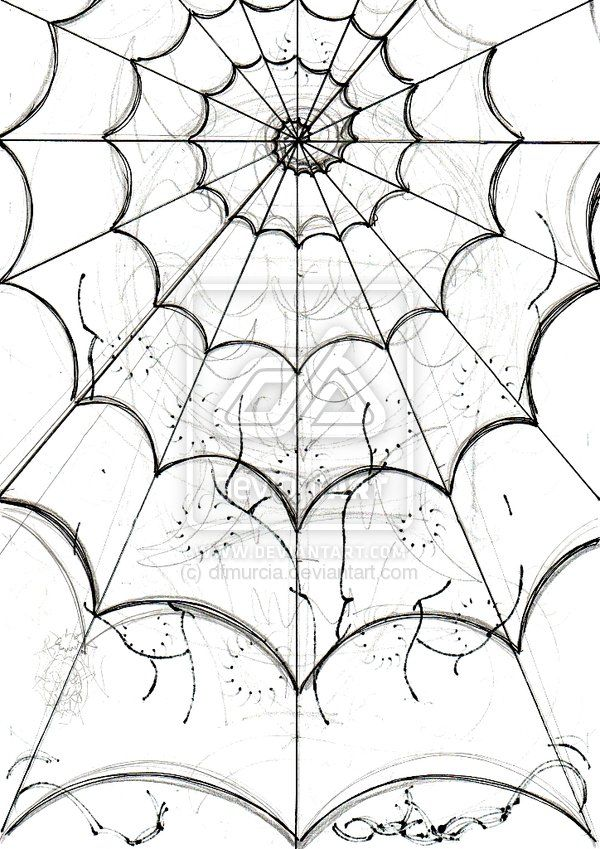 Drawn spider detailed Image Drawing Find Spider on