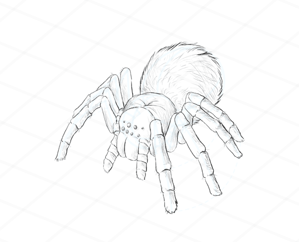 Drawn spider detailed Animals: Movement How Species tutorial