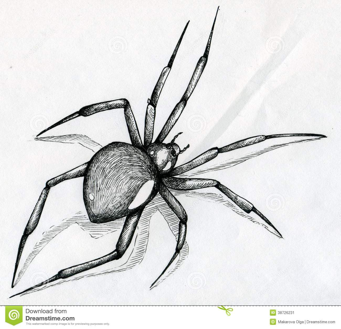 Black Drawing Widow Black 38726231