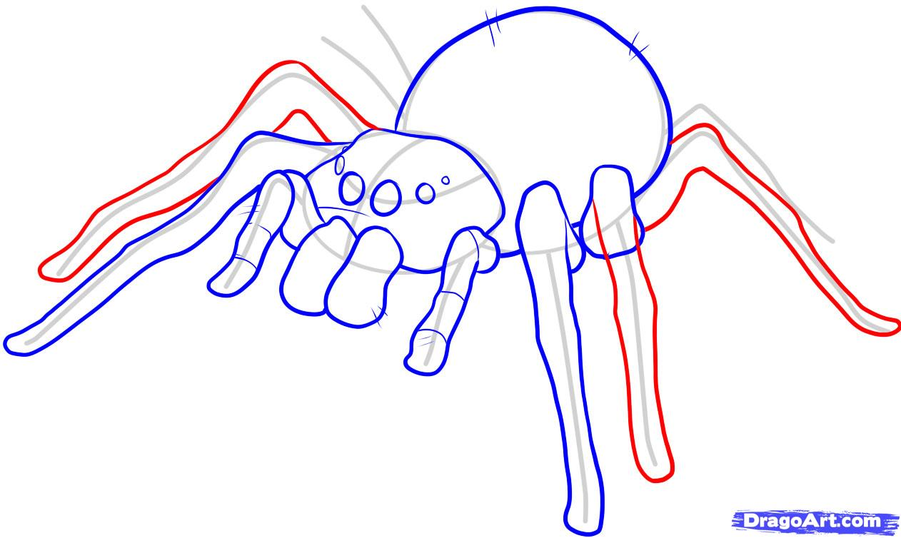 Drawn spider easy To an how FREE How