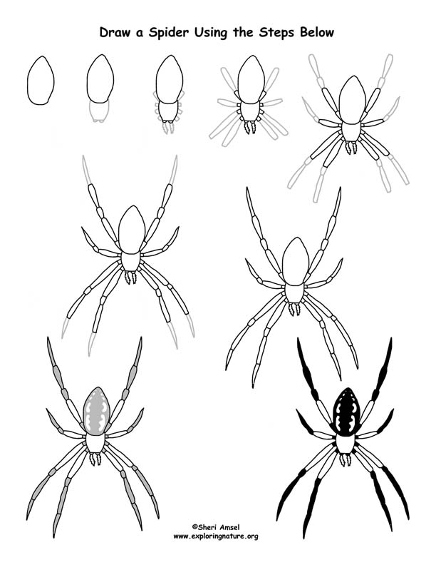 Drawn spider fun Lessons Lesson Drawing Pinterest Art