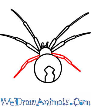 Drawn spider identification Tutorial Draw to How Black