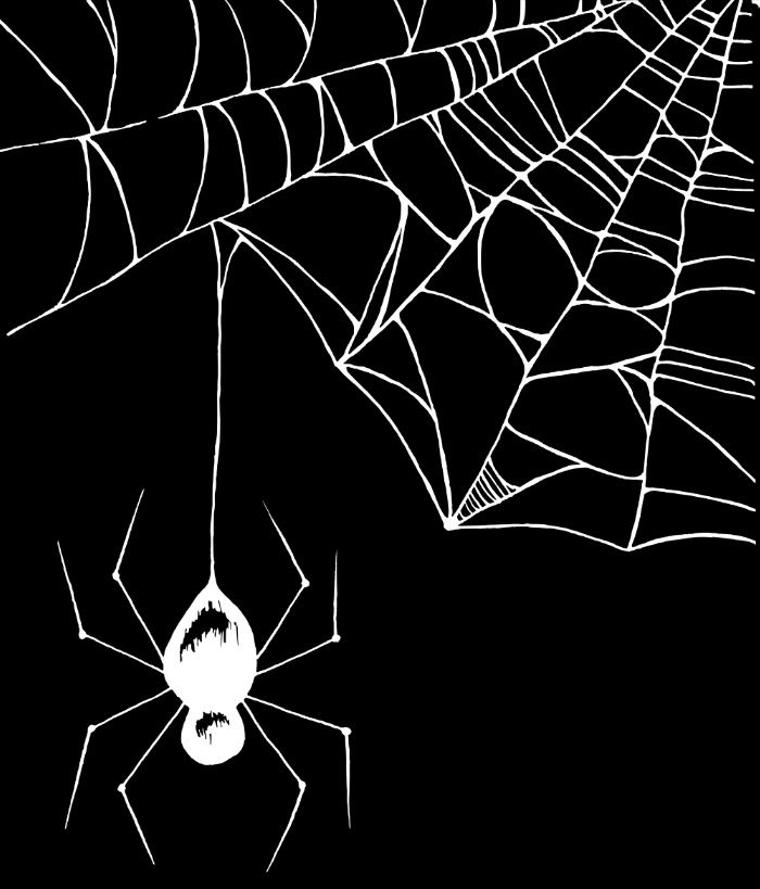 Drawn spider illustration Pinterest Print Best White DrawingHalloween