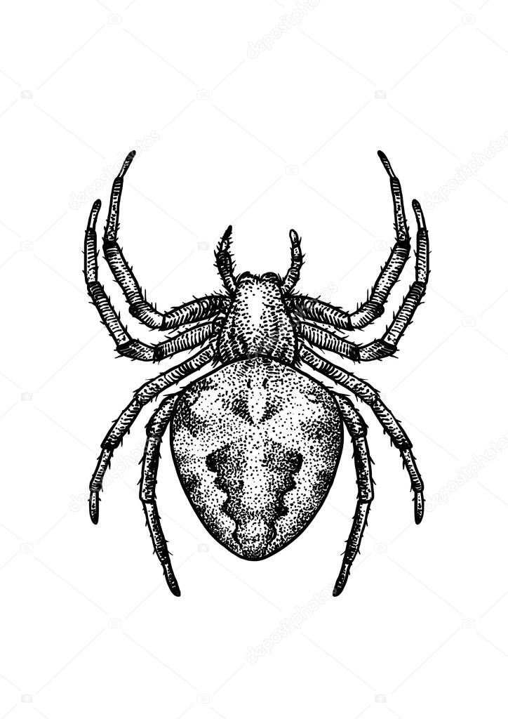 Drawn spider insect #8