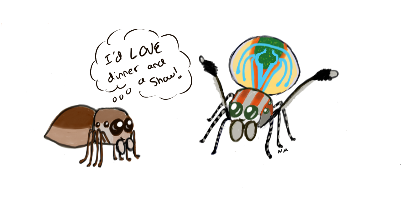 Drawn spider jumping spider Volans) Bug Peacock an Ask