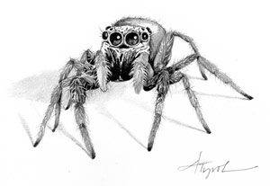 Drawn spider jumping spider Without Web Outside Hard A