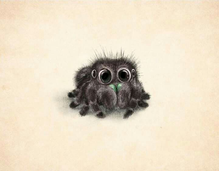 Drawn spider jumping spider Art dangerous) Pinterest is Explore