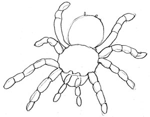 Drawn spider line drawing #10