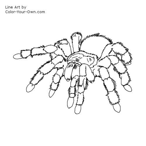 Drawn spider line drawing #13