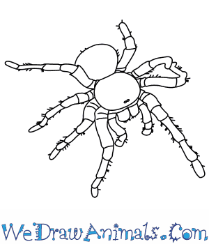 Drawn spider line drawing #5